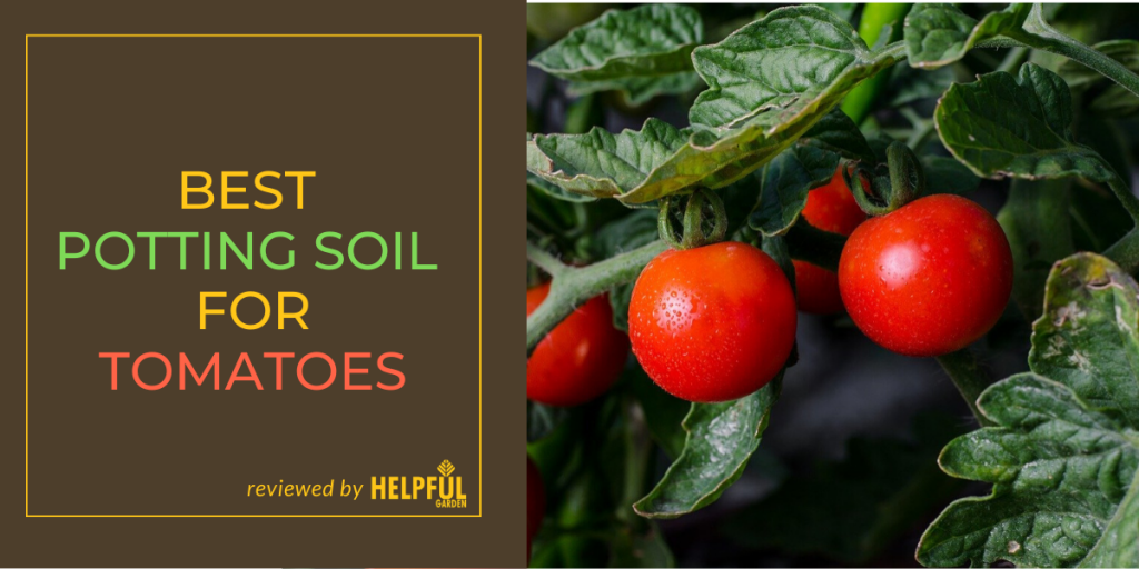 Best Potting Soil For Tomatoes
